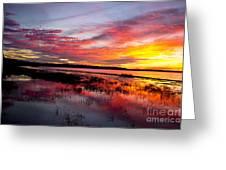Sunset At Myakka River State Park, Florida Greeting Card