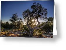 Sunset At The Grand Canyon Greeting Card