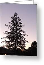 Sunset Behind The Pines Greeting Card