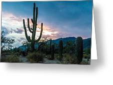 Sunset Beyond The Cacti Greeting Card