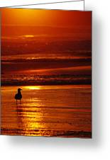 Sunset Bird 2 Greeting Card