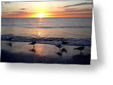 Sunset Birds Greeting Card