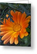 Sunset Daisy Greeting Card