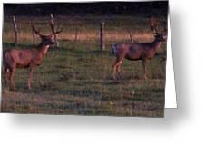 Sunset Deer II Greeting Card