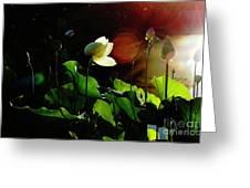 Sunset Drama Greeting Card