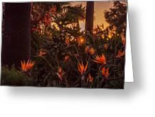 Sunset Garden Greeting Card