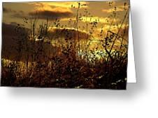 Sunset Grasses Greeting Card