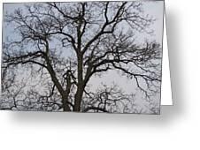 Sunset Hickory Tree Greeting Card