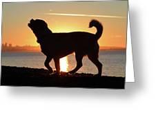 Sunset Howl Greeting Card