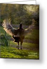 Sunset In His Wings Greeting Card
