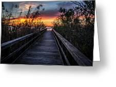 Sunset In Meaher Park #102 Greeting Card