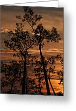 Sunset In The Pine Woods Greeting Card