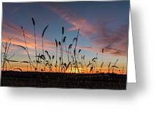 Sunset In The Weeds Greeting Card