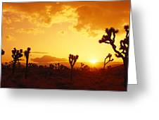 Sunset, Joshua Tree Park, California Greeting Card