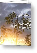 Sunset Leaves 2 Greeting Card