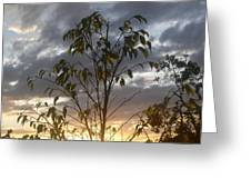Sunset Leaves 3 Greeting Card