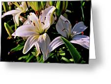 Sunset Lilies Greeting Card