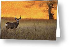 Sunset Lover Greeting Card