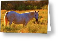 Sunset Mare Greeting Card by Gus McCrea