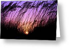 Sunset Myrtle Beach Greeting Card