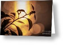 Sunset Of An Ant Greeting Card