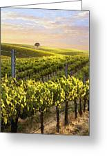Sunset On A Vineyard Greeting Card