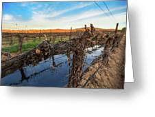 Sunset On The Vine Greeting Card