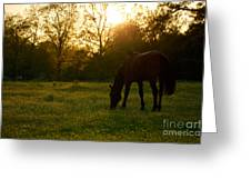 Sunset Over A Spring Meadow Greeting Card