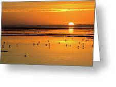 Sunset Over Arcata Marsh, With Avocets Greeting Card