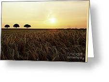 Sunset Over Cornfield Greeting Card