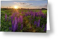 Sunset Over Meadow Of Lupine Greeting Card