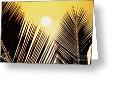 Sunset Palm Fronds Greeting Card