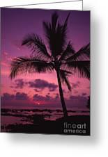 Sunset Palms Greeting Card