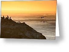 Sunset Pelicans IIi Greeting Card