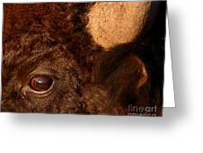 Sunset Reflections In The Eye Of A Buffalo Greeting Card
