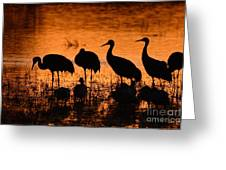 Sunset Reflections Of Cranes And Geese Greeting Card