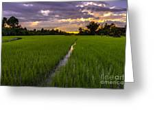 Sunset Rice Fields In Cambodia Greeting Card