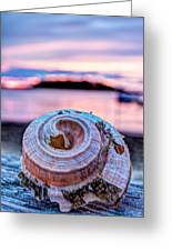 Sunset Shell Greeting Card