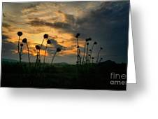 Sunset Silhouettes In June Greeting Card