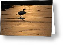 Sunset Swan Greeting Card