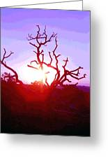 Sunset Through Silhouetted Tree In Desert 2 Greeting Card
