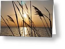 Sunset Through The Dune Grass Greeting Card