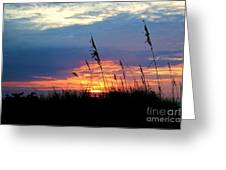 Sunset Through The Oats Greeting Card