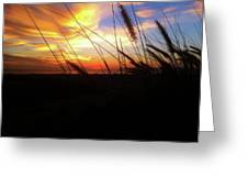 Sunset Through The Sea Grass Greeting Card
