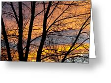 Sunset Through The Tree Silhouette Greeting Card