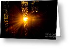Sun Bursting Through The Trees, Chiloquin Oregon Greeting Card