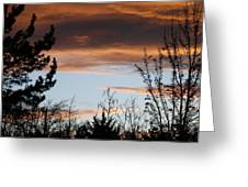 Sunset Thru The Trees Greeting Card