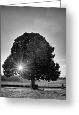 Sunset Tree In Mono Greeting Card