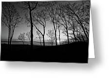 Sunset Trees Greeting Card