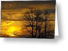 Sunset With Backlit Trees Greeting Card